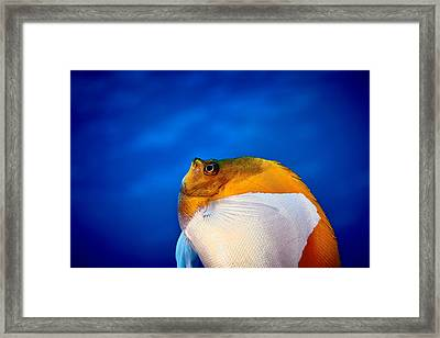 Fla-150811-nd800e-26086-color Framed Print
