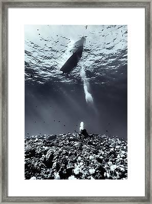 Fla-151028-nd800e-107-bw-selenium Framed Print