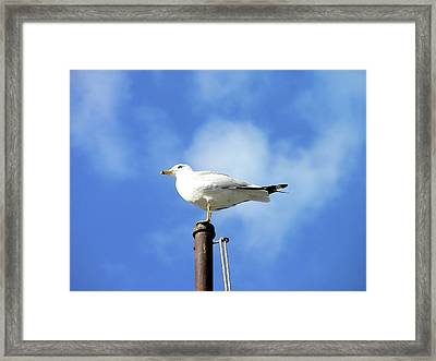 Flagpole Gull Framed Print by Al Powell Photography USA