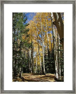 Flagstaff Aspen 796 Framed Print