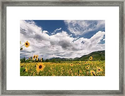 Flagstaff Wildflower Extravaganza Framed Print