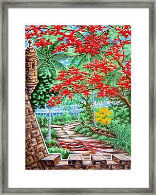 Flamboyan En El Morro Framed Print by Samuel Lind