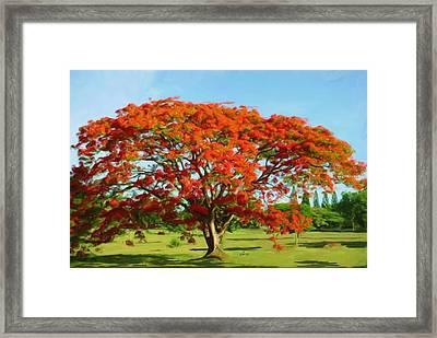 Flamboyan Royal Poinciana Framed Print by Yiries Saad