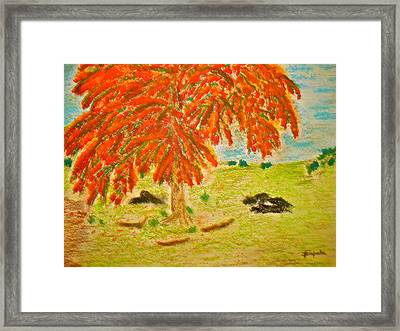 Flamboyan-tropical Splendor Framed Print