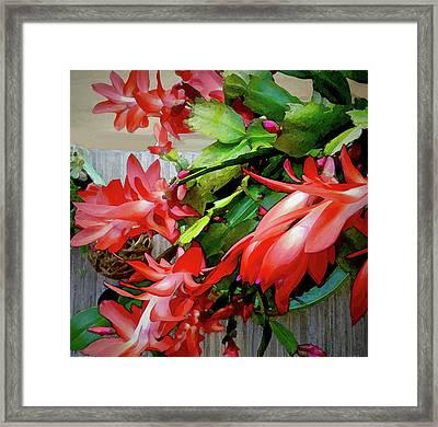 Flamboyance Framed Print