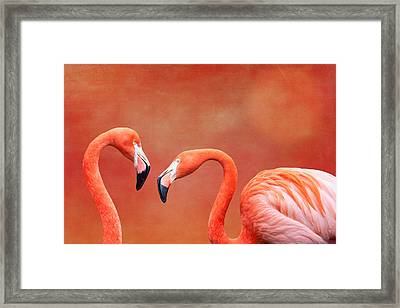 Flamboyant Flamingos Framed Print by Tom Mc Nemar