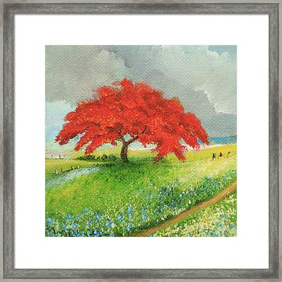 flamboyant Near the Road Framed Print