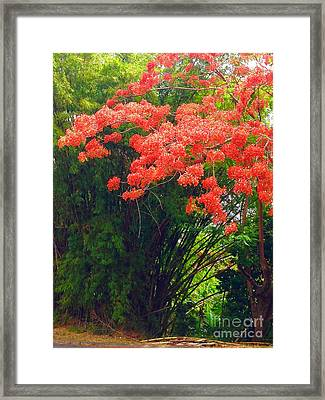 Flamboyant With Bamboo Framed Print