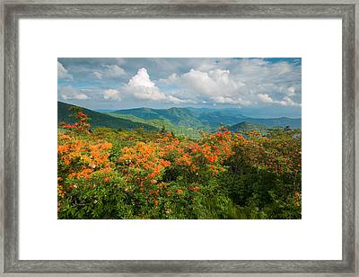 Flame Azaleas Roan Highlands Appalachian Trail Framed Print