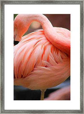 Flame Colored Framed Print