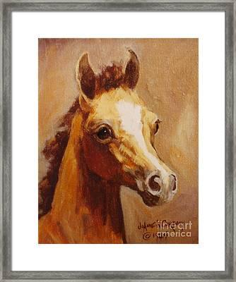 Flame Princess    Arabian Filly Portrait Framed Print by JoAnne Corpany
