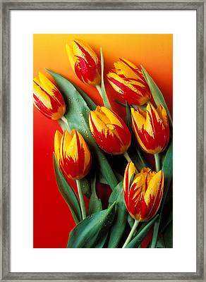 Flame Tulips Framed Print by Garry Gay