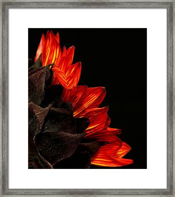 Framed Print featuring the photograph Flames by Judy Vincent