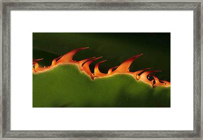 Flaming Aloe Framed Print by Matt Cormons
