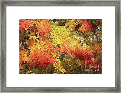 Flaming Autumn Leaves Art Framed Print