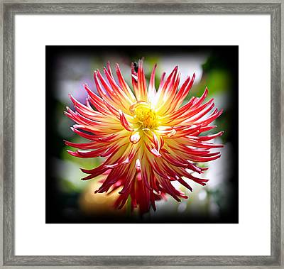 Framed Print featuring the photograph Flaming Beauty by AJ Schibig