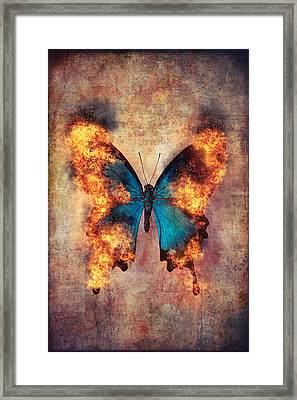 Flaming Blue Butterfly Framed Print by Garry Gay