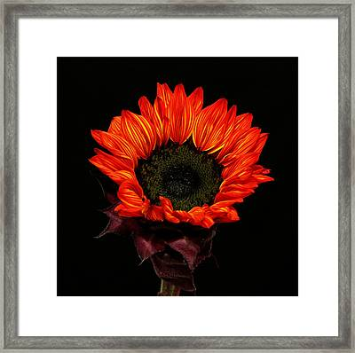 Framed Print featuring the photograph Flaming Flower by Judy Vincent