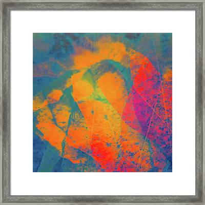 Framed Print featuring the photograph Flaming Foliage 1 by Ari Salmela