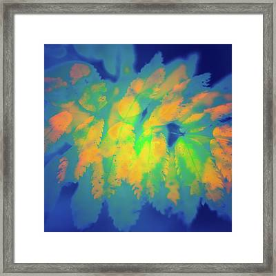 Framed Print featuring the photograph Flaming Foliage 2 by Ari Salmela