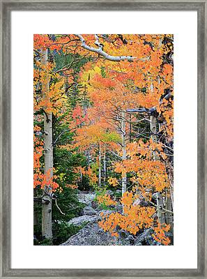 Flaming Forest Framed Print