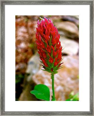 Framed Print featuring the photograph Flaming Red by Debra     Vatalaro