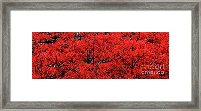 Framed Print featuring the photograph Flaming Red Panorama II By Kaye Menner by Kaye Menner