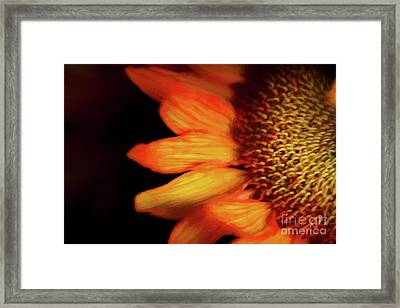 Flaming Sunflower Framed Print