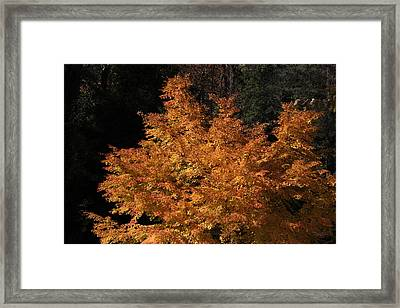 Framed Print featuring the photograph Flaming Tree Brush by Deborah  Crew-Johnson
