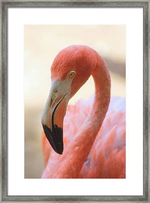 Framed Print featuring the photograph Flamingo 2 by Elizabeth Budd