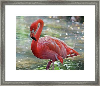 Flamingo 2  Framed Print