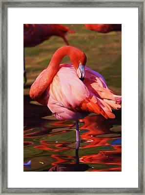Flamingo 2 Framed Print by Russell  Barton