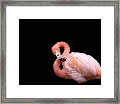 Flamingo 3 Framed Print