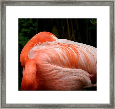Flaming O Framed Print by Cathy Harper