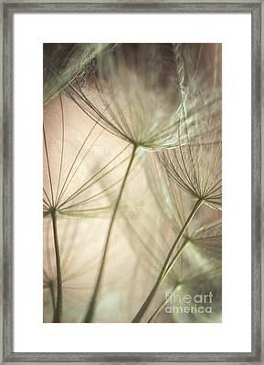 Flamingo Dandelions Framed Print by Iris Greenwell