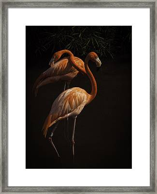 Flamingo Delight Framed Print
