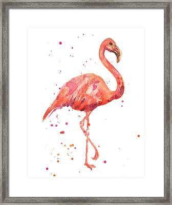 Flamingo Facing Right Framed Print by Alison Fennell