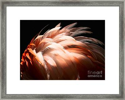 Flamingo Feathers Framed Print