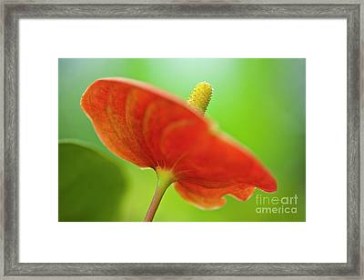 Flamingo Flower 2 Framed Print by Heiko Koehrer-Wagner