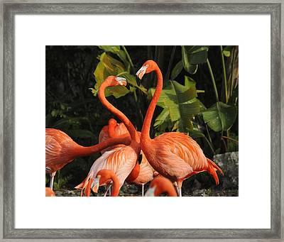 Flamingo Heart Framed Print by Keith Lovejoy
