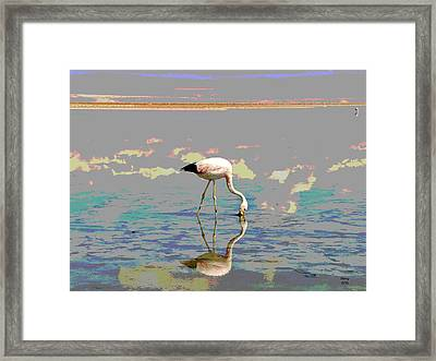 Flamingo In The Sunset Framed Print by Charles Shoup