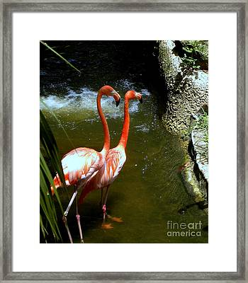 Flamingo Pair Framed Print