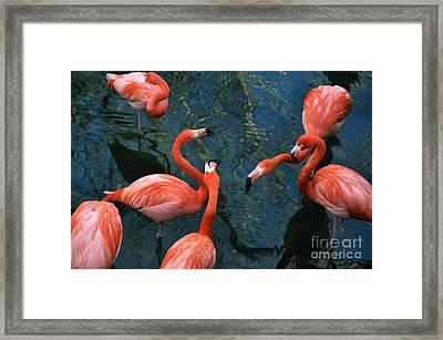 Flamingo Party 1 Framed Print