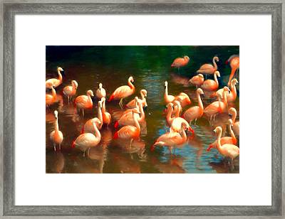 Flamingo Party Framed Print by Sharon Lisa Clarke