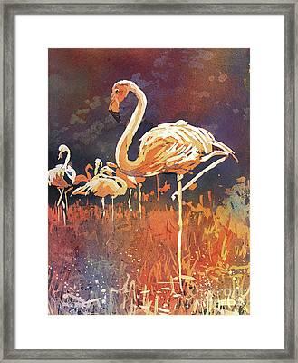 Flamingo Posing Framed Print by Ryan Fox