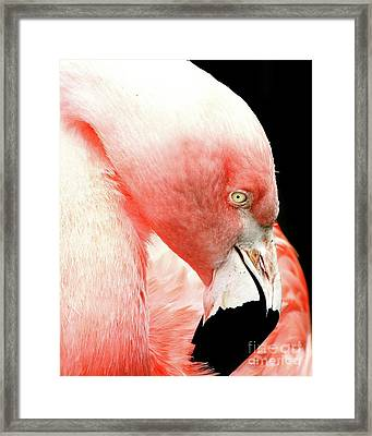 Flamingo . R7927 Framed Print by Wingsdomain Art and Photography