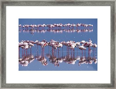 Flamingo Reflection - Lake Nakuru Framed Print by Sandra Bronstein