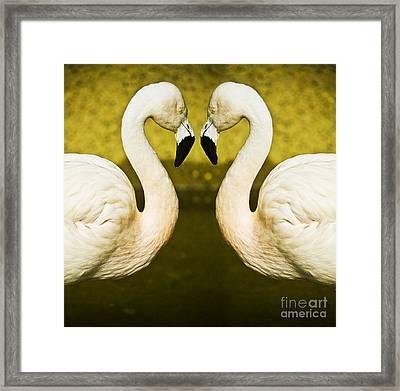 Flamingo Reflection Framed Print