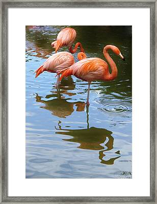 Framed Print featuring the photograph Flamingo Reflections by Margaret Bobb
