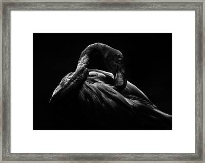 Framed Print featuring the photograph Flamingo by Ryan Smith